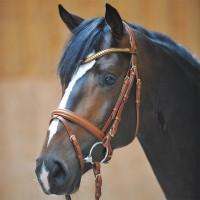 Ogłowia dla koni