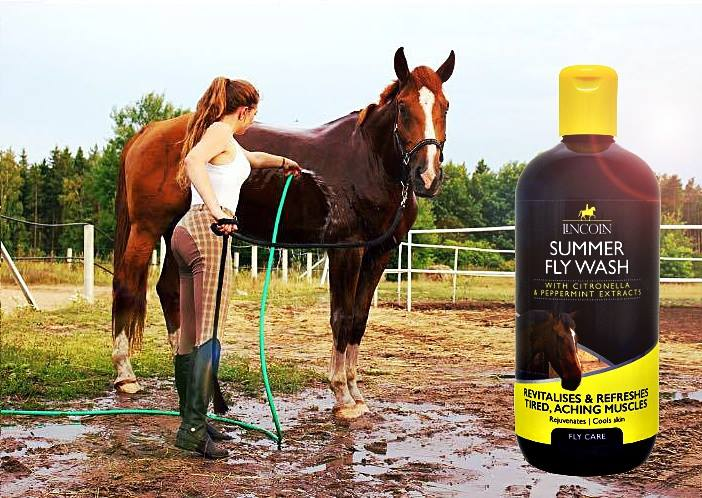 Koń myty szamponem Lincoln