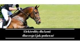 Elektrolity dla koni - dlaczego i jak podawać