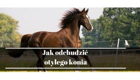 Wskazówki jak odchudzić otyłego konia